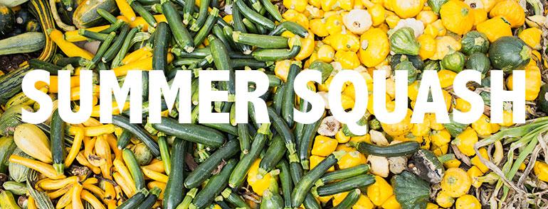 Summer-squash-vegetables