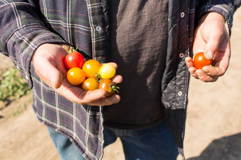 coastal-farms-cherry-tomatoes