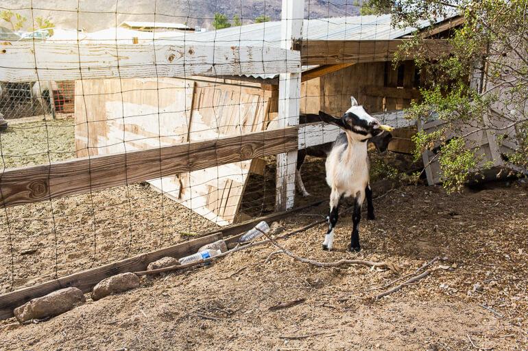 JF-Organic-Farm-Yucca-Valley