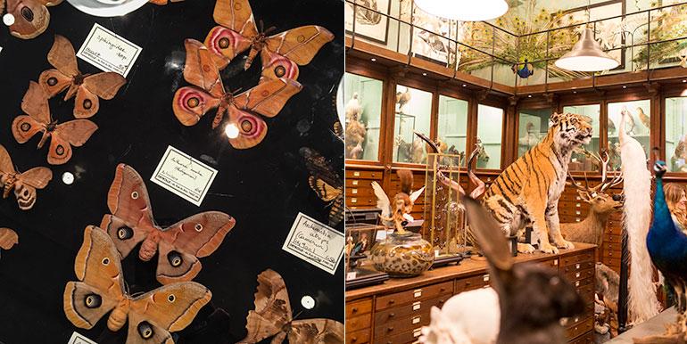 taxedermy-paris-butterflies-deyrolle