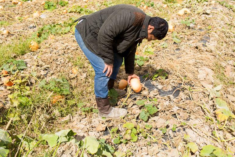 jf-organic-farm-pumpkin