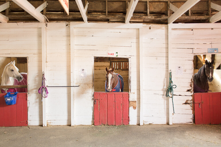 horses-stable-barn-wood