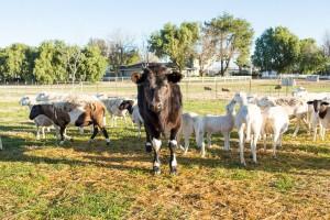 Small Scale Pasture Farming