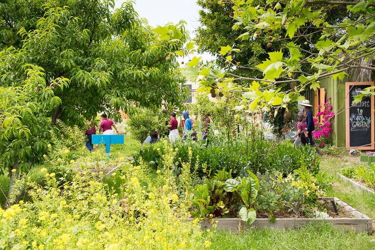 garden-school-foundation-gsf-teaching-urban-los-angeles