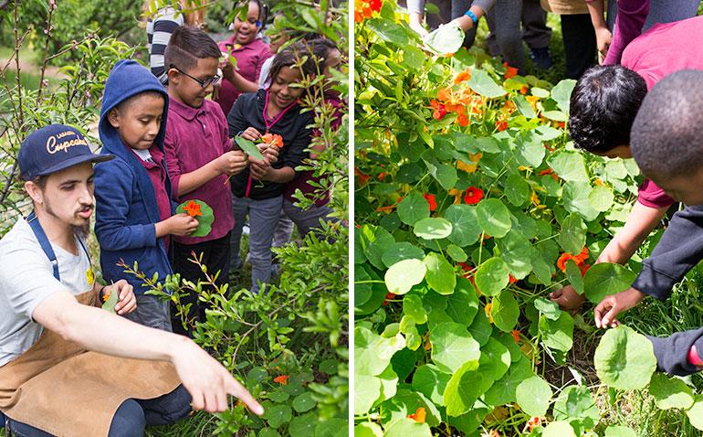 garden-school-foundation-gsf-teaching-nasturtium-children