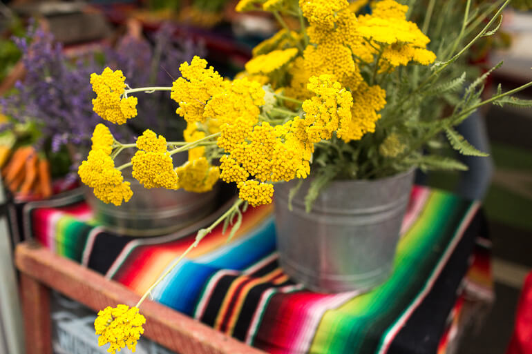 yarrow-yellow-smfm-shopping-catering-windrose-farm