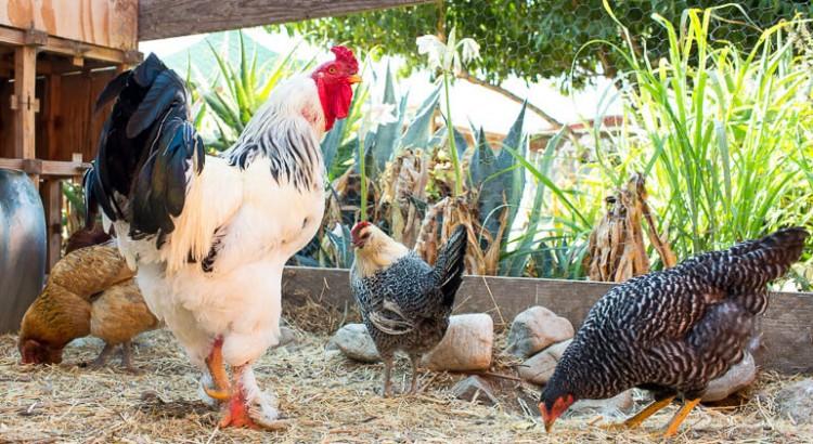 urban-farm-los-angeles-organic