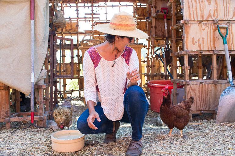 chickens-urban-garden-farm-los-angeles