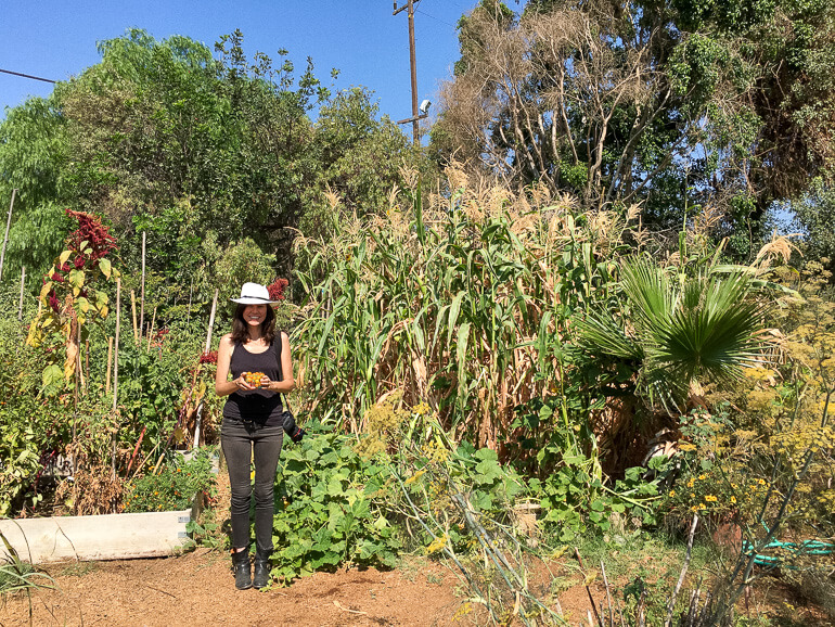 corn-urban-garden-farm-los-angeles