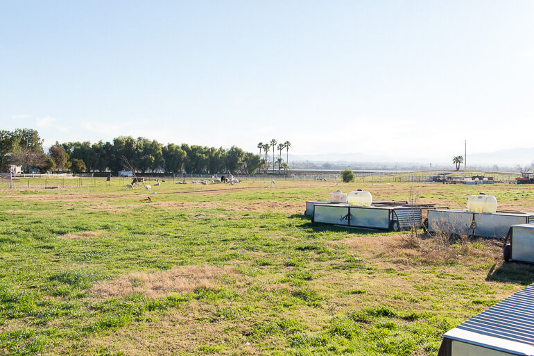 chicken-tractor-pasture-raised-temecula-california